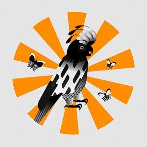 vector, graphics, illustration, art, carolyn ross, parrot, animal, butterfly, yellow, black, pattern, bird
